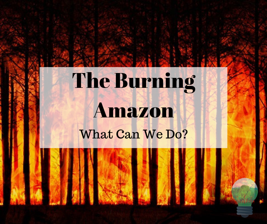 The burning amazon What Can we do? Amazon Rainforest Fires